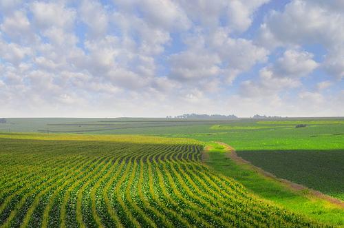 Illinois Farm Land Prices Dip