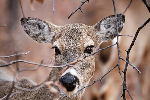 Deer Hunting Big Business In WesternIllinois