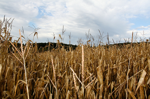 Governor Declares Harvest Season Emergency