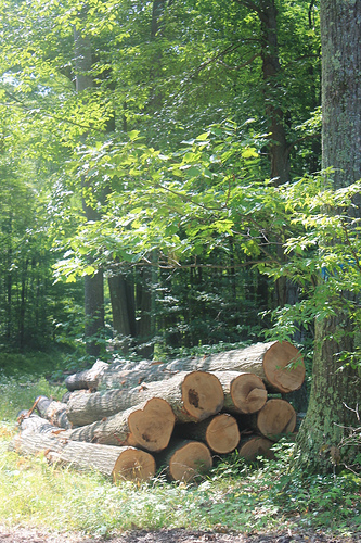 IllinoisTells Land Owners Their Trees Are Valuable