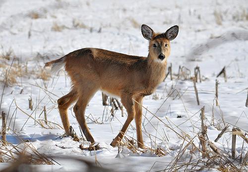 Illinois Deer Hunters Get More Deer In 2017