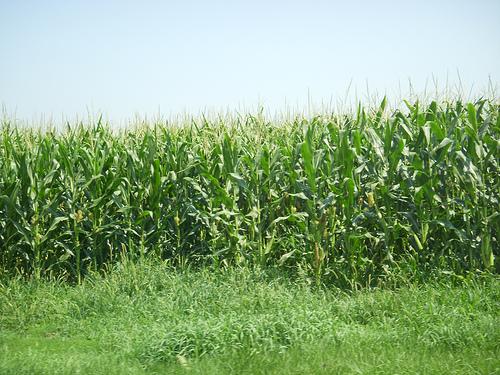 Latest Drought Report Due Thursday