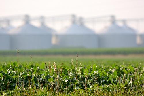 Illinois Farm Bureau Chief Wants Trade, Not Aid