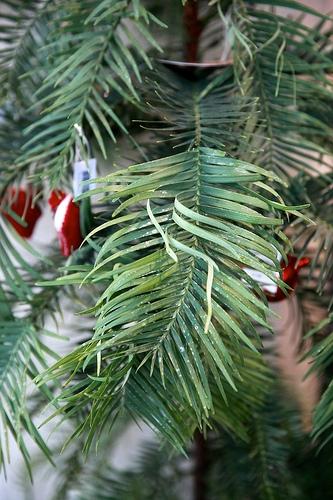 Put Live Christmas Trees to Use
