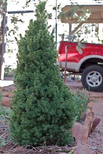 City of Mattoon Collecting Christmas Trees This Week