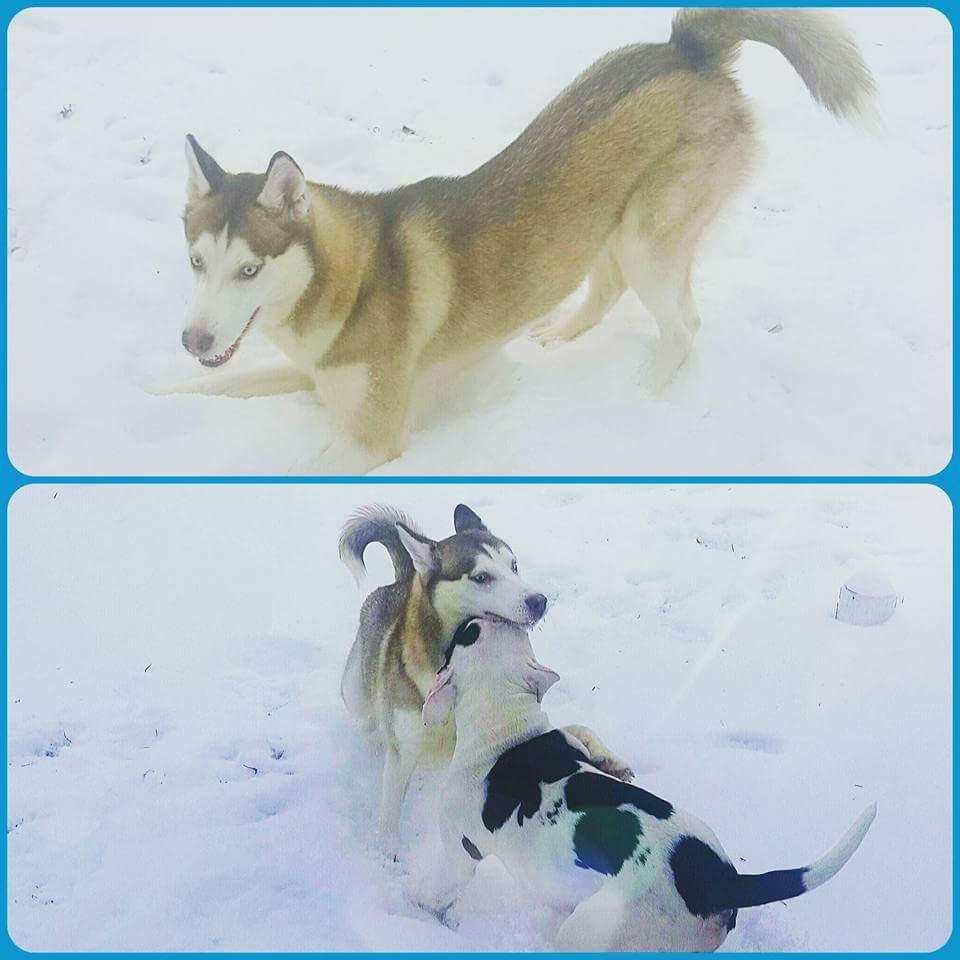Lost Dog Luna