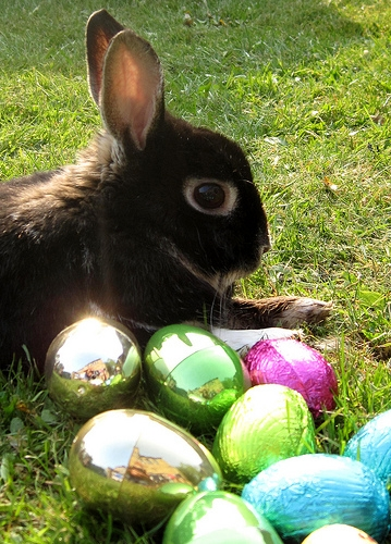 Easter Traditions Could Be Deadly For Pets