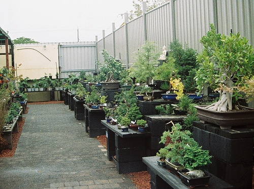 Marshall Plant Sale This Weekend