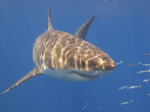Boy Remains In Critical Condition Following Shark Attack