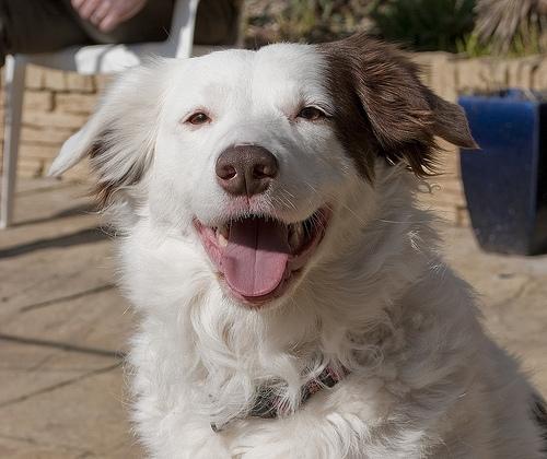Lake Shelbyville Dog Days of Summer Dog Show Saturday!