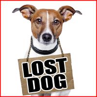 Dog Found In Mattoon