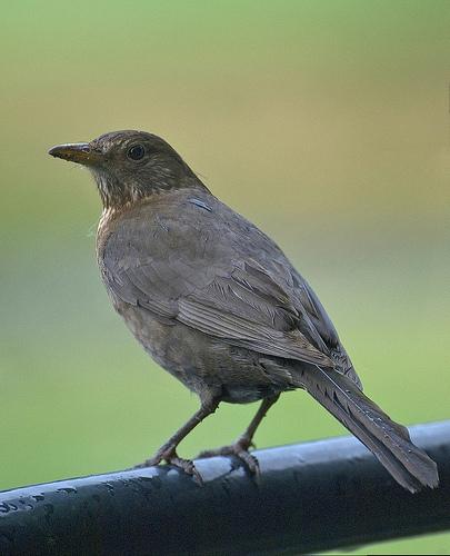 Fox Ridge Presentation on Nesting Birds