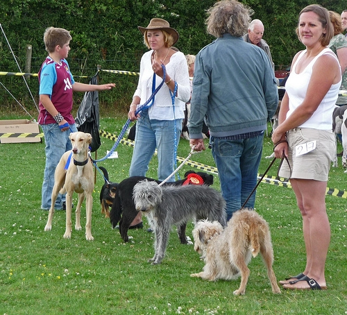 Bagelfest Dog Show Tomorrow