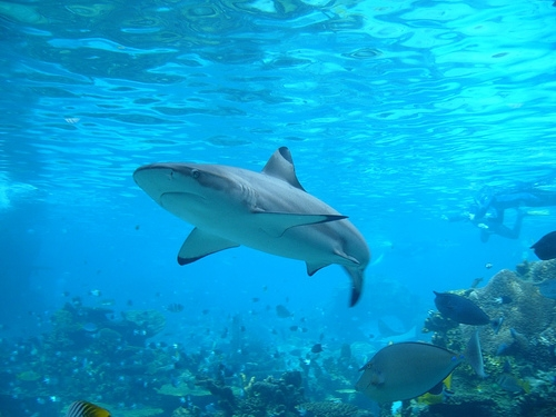 Sharks (And Lots of Them) Coming to the Midwest