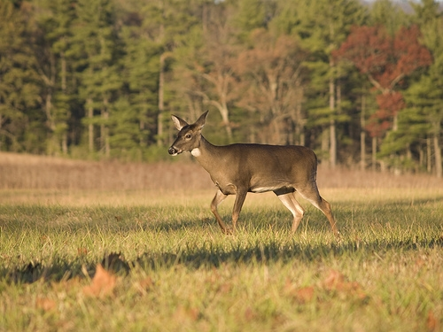 28th Deer Hunt for People with Disabilities
