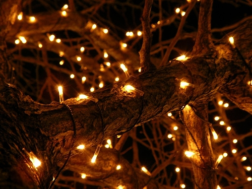 Town Officials Seek To Charge Family $50K For Extravagant Christmas Lights