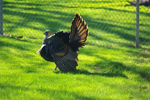 Embarras Chapter of the National Wild Turkey Federation