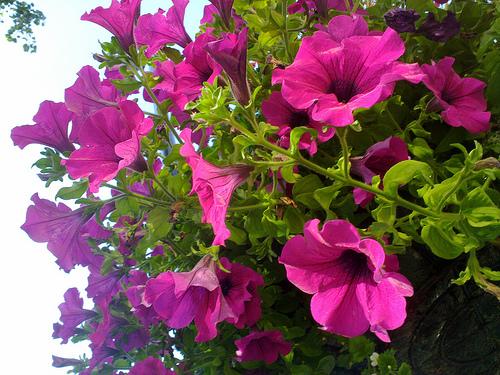Spring Plant Sale in Windsor