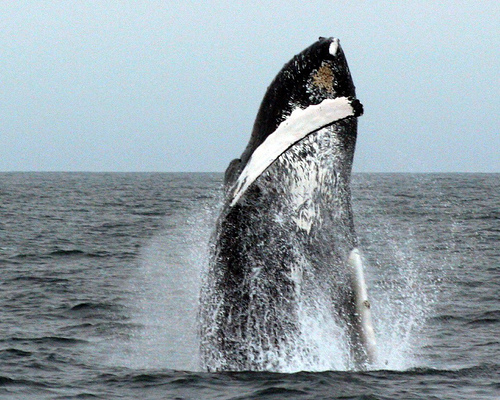 Plastic Bags, Other Items Found In Stomach Of Dead Whale