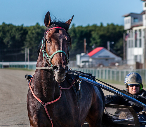 Coles County Fair Moves Start Time for Twilight Harness Racing Tonight