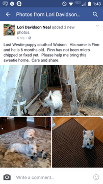 LOST West Highland Terrier 10/27/16