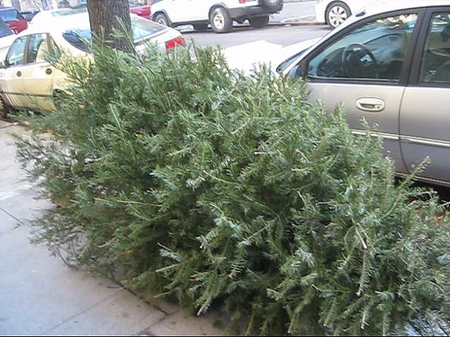 City of Effingham to Pick up Christmas Trees