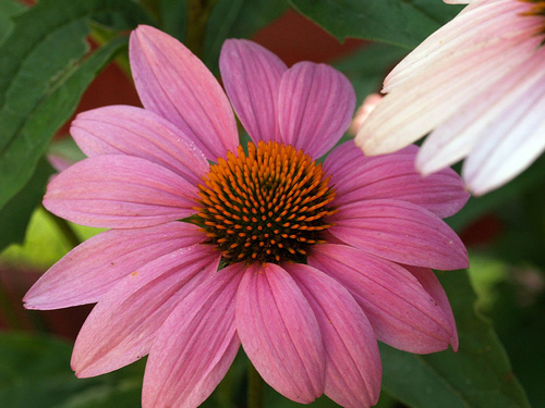 U of I Extension Master Gardeners to Hold Plant Sale