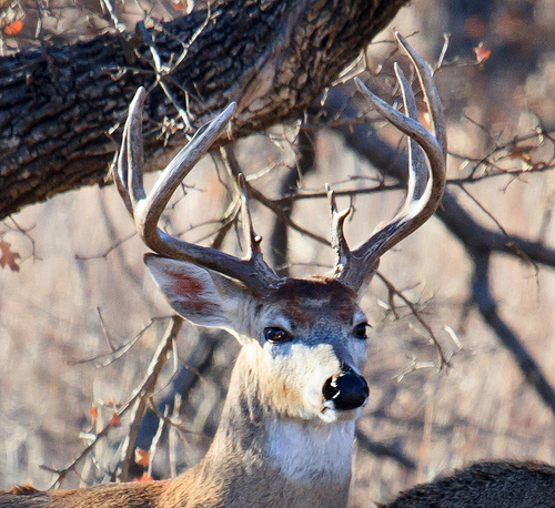 Illinois Deer Hunters Bag Over 80 Thousand Deer