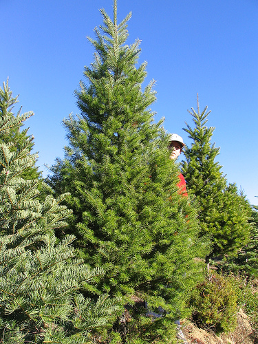 City of Effingham Tree Pick-Up Scheduled For January 8