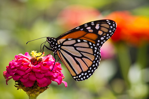 """HSHS St. Anthony's Memorial Hospital invites community to annual """"Butterfly Ball"""" on February 17"""