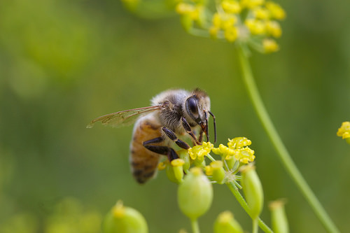 Farmers Can Help Save Honeybees