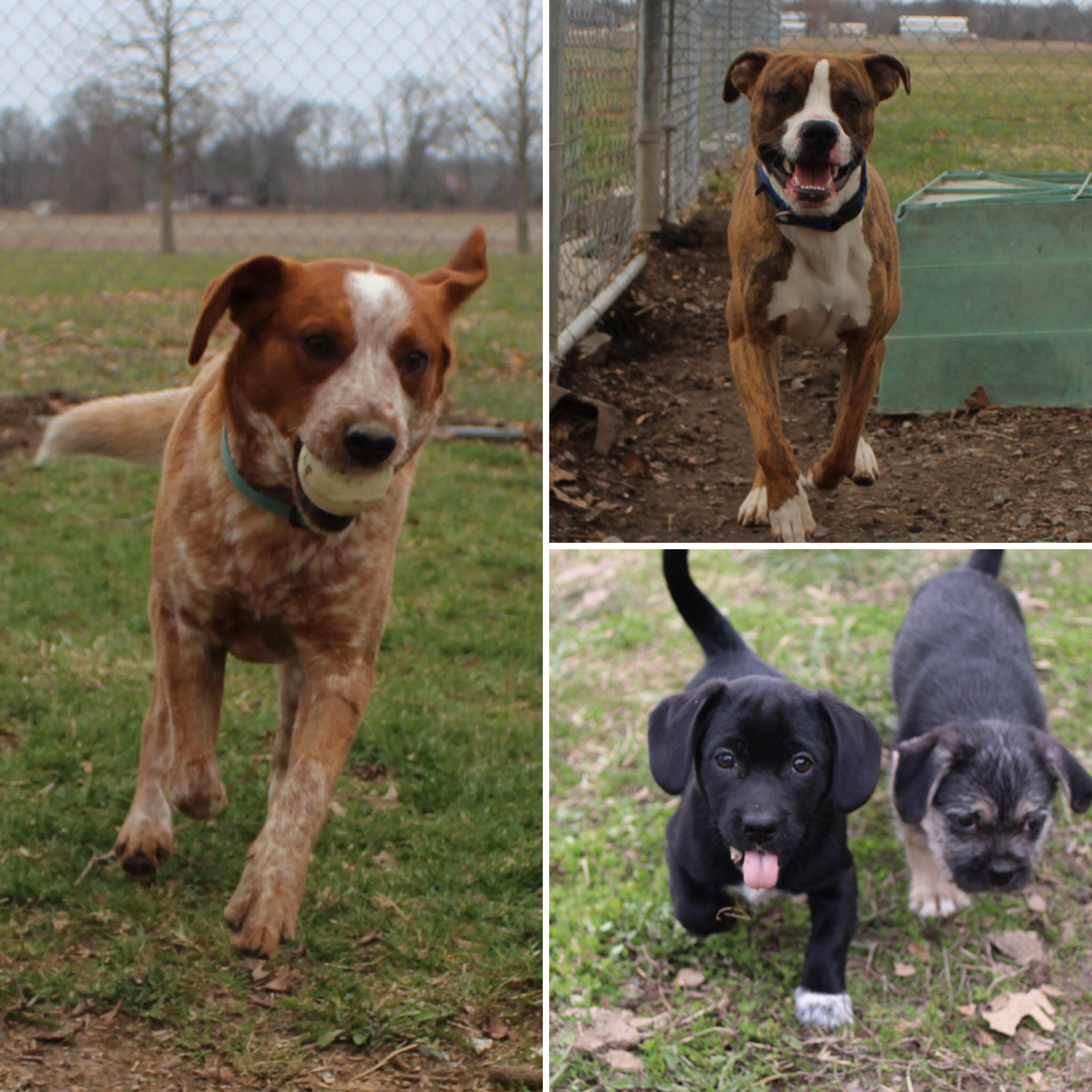 Effingham County Humane Society Shares Dogs Available for Adoption
