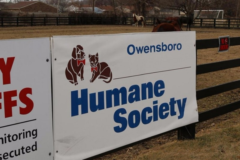 Funds Being Collected For Humane Society