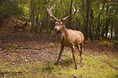 Deer Season Starts Saturday In Kentucky