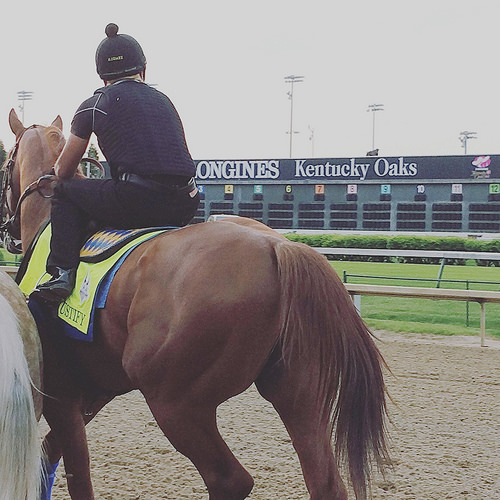 Justify Honored By Kentucky Derby Museum, More To Come