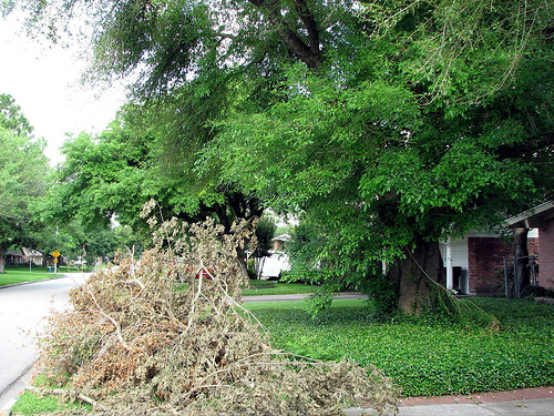 Owensboro Sanitation Switching to Leaf Collection Soon