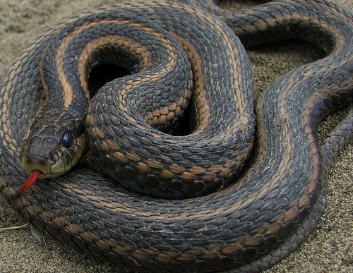Five-Foot Boa Constrictor Found In Rental Car At Oakland Airport