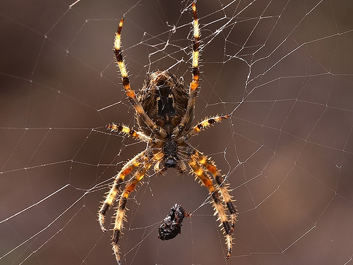The Ten Most Common Phobias Include Heights, Spiders, and Public Speaking