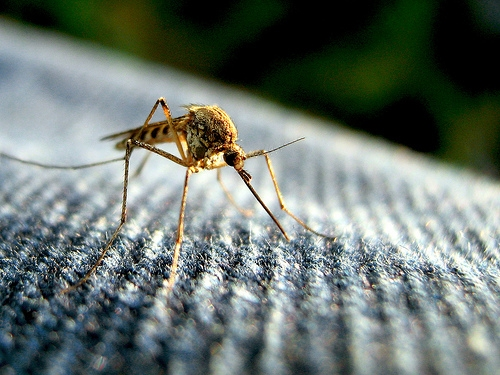 Four Facts About Mosquito Bites