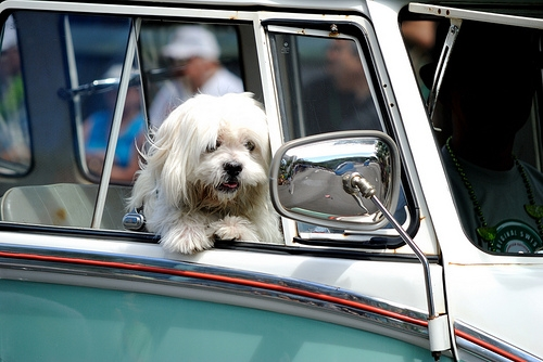 Did You Buy a Car Because Your Dog Would Like It?