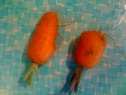 A Guy Replaces His Sister's Goldfish With Baby Carrots to See If She Notices . . . But She Doesn't