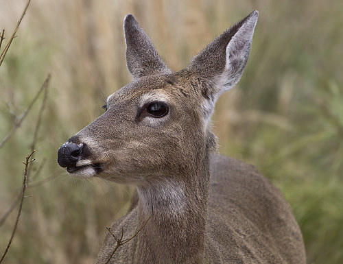 A Walmart Shopper Puts a Runaway Deer in an MMA Headlock
