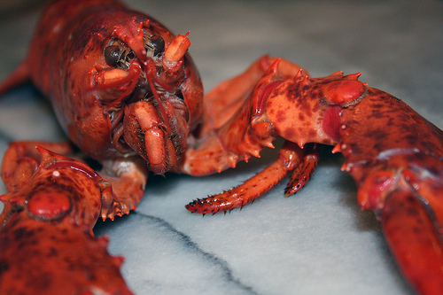 A Company Owner Stole $1.5 Million Worth of Lobsters to Sell on the Lobster Black Market