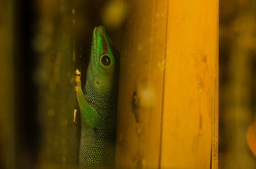A Guy Is Suing Heineken After He Found Two Geckos in His Beer Bottle
