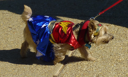 Here's How to Safely Dress Your Dog in a Halloween Costume