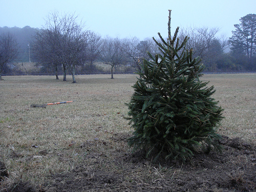 A Guy Just Stole Someone's Christmas Tree . . . Yes, in Mid-September