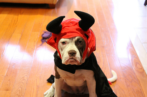 Here Are the 10 Most Popular Pet Costumes This Halloween
