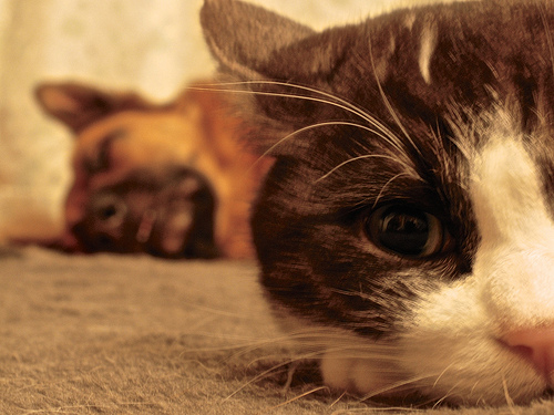 The Five Most Popular Pets in America . . . and the Ways We Show Them We Love Them