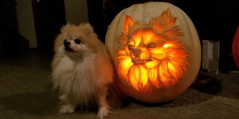 Dog-o'-Lanterns are a 'must carve' this Halloween