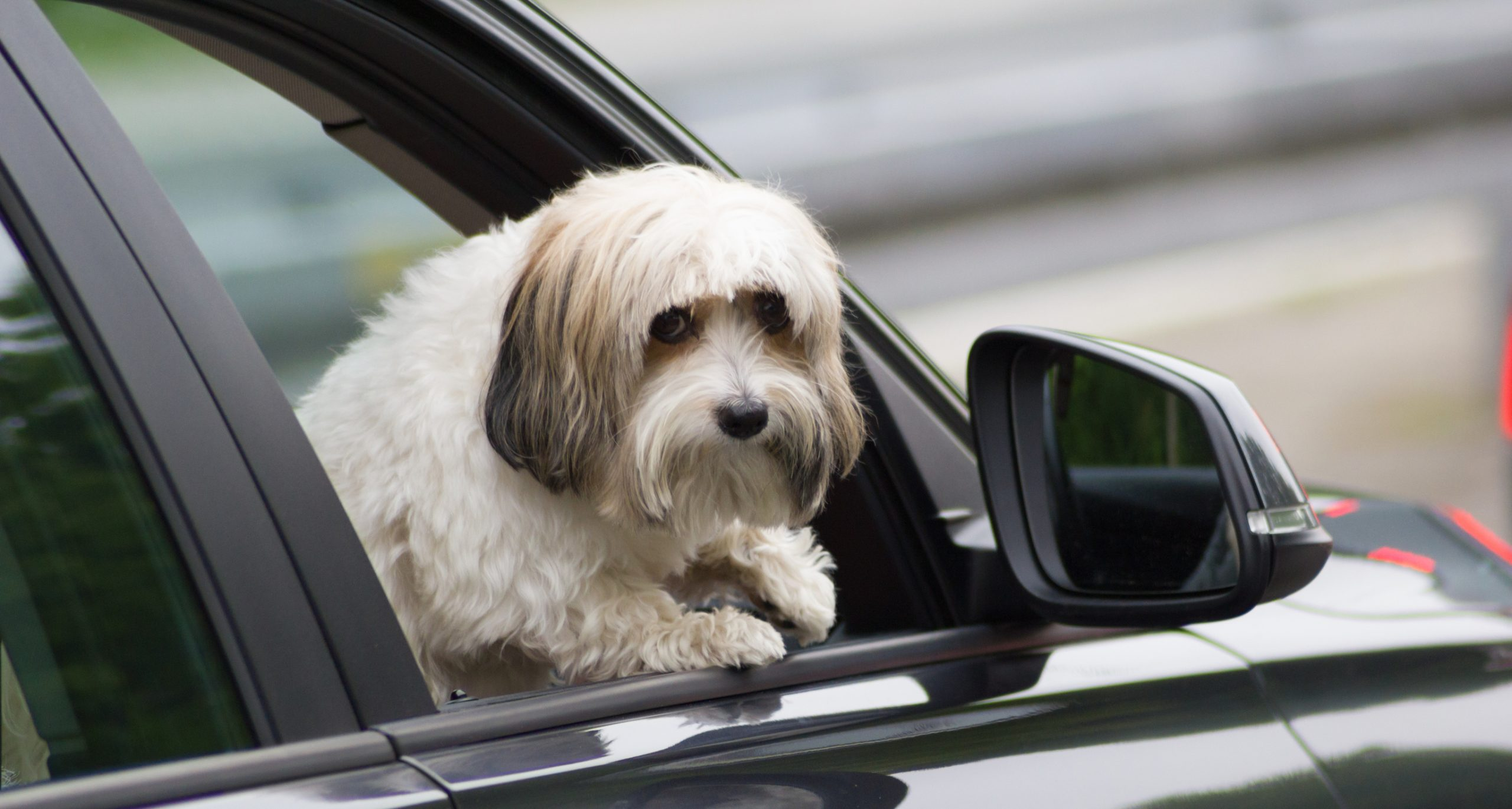 Your next car might have a 'Dog Mode' to keep pets safe